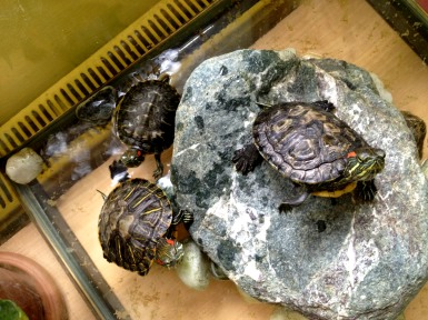 These poor turtles. The trauma they endure being within reach of 5-year-olds is unspeakable.